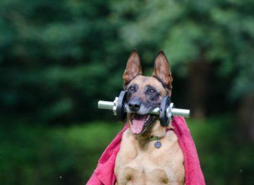 Trening siłowy w domu  opinie